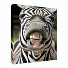 Zebra smile and teeth Canvas Wall Art Print Large Any Size