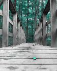 Teal Wall Art/ Forest Trees / Bridge Home Decor Matted Picture  (Options)