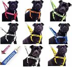 Staffordshire Bull Terrier Non-Pull Dog Harness Or 2  4 6 Foot Lead Sets