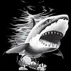 shark print in white ink beach ocean jaws Gildan Ultra Cotton Tee short sleeve