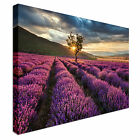 Lavendar Field at Sunrise Canvas wall Art prints high quality great value