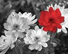 Black White Red Gray Floral Bedroom Bathroom Pop Of Color Wall Art Picture