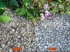 1-30kg 20mm Dove Grey Peakstone Gravel Chippings Pathway Deter Weed Top Dressing