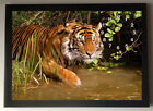 Tiger A4 Picture Clock