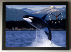 Killer Whale A4 Picture Clock