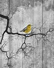 Rustic Distressed Yellow Bird On Tree Branch Moon Wall Art Home Decor Picture