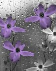 Purple Gray Floral Bathroom Bedroom Wall Art Home Decor Matted Picture