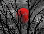 Black White Red Moon Tree Modern Bedroom Wall Art Home Decor Matted Picture