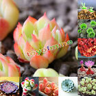 80Pcs Succulents Seeds Potted Plant Home Garden