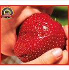 1000pcs Giant Red Strawberry Seeds, Garden Fruit Plant, Rare And Delicious 2018