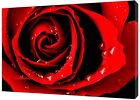DARK RED ROSE  PHOTO  PRINT ON WOOD  FRAMED CANVAS WALL ART