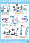 Bodybuilding+Arm+Muscles+Poster+Triceps+Weight+Training+Chart+