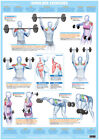 Body+Building+Shoulder+Muscles+Poster+Weight+Training+Exercise+Chart+