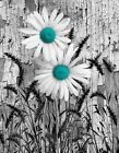 Rustic Teal Gray Home Decor Daisy Flower Wall Art Matted Picture