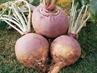 Rutabaga Seeds, American Purple Top, NON-GMO, Variety Sizes Sold, FREE SHIPPING