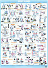 Weight Training Exercise Workout Poster Body Building Chart Fitness Training