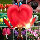 200Pcs Rare Mixed Bleeding Heart Seeds Dicentra Spectabilis Flower Plants