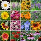 All Perennial Wildflower Mix, 15 Species Flowers, Variety Sizes, Easy Grow
