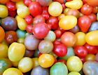 Rainbow Cherry Tomato Seeds, NON GMO, Organic, Colorful, FREE SHIPPING, SALE