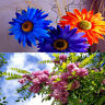 5D DIY Full Drill Diamond Painting Positive Flowers Cross Stitch Embroidery L&6