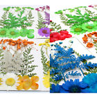 Pressed Dried Flowers Epoxy Resin Candle Filling Jewelry Making Nail Art Craft