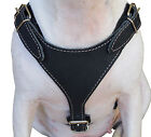 """Genuine Leather Dog Harness Excercise Walk 25""""- 30"""" chest Boxer Amstaff"""