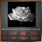 ' Black & White Rose ' Flower Bloom Art Canvas More Style & Size