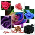 Beautiful 50/25Pcs Rose Seeds Various Color Petal Plants Home Garden Flower Seed