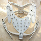 White Leather Dog Harness Spikes Studs  Terrier Pitbull Mastiff Neck Size 17-24""