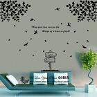 Large Tree Branches Bird wall stickers wall Decal Removable Art Vinyl Decor Home