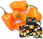 Habanero Chili Extract - Thick Concentrated Oleoresin Oil