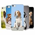 HEAD CASE DESIGNS DOG BREEDS CASE COVER FOR APPLE iPHONE 5 5S