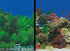 """Aquarium Fish Tank Background by the foot  ~ 24"""" Height Two-Sided ~ style 053"""