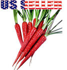200+ ORGANICALLY GROWN Atomic Red Carrot Seeds Heirloom NON-GMO RARE Healthy