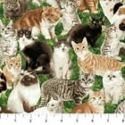 Whiskers Kitty Cats In The Garden 100% Cotton Fabric