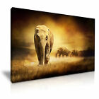 NEW ANIMAL Elephant 2 Canvas Framed Printed Wall Art ~ More Size