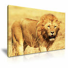 NEW ANIMAL Lion 4 Canvas Framed  Printed  Wall Art ~ More size