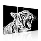 ANIMAL Tiger 28 Canvas 3A Framed Printed Wall Size ~ 3 Panels
