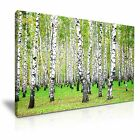 NATURE Forest 93 Landscape 1L Canvas Framed Printed Wall Art ~ More Size
