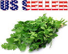 200+ ORGANICALLY GROWN Prezzemolo Gigante D'Italia Parsley Seed Heirloom NON-GMO