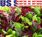 500+ ORGANICALLY GROWN Microgreens Mix 40 Varieties Superfood Heirloom NON-GMO