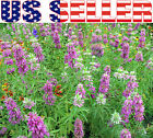 200+ ORGANICALLY GROWN Lemon Mint Seeds Heirloom NON-GMO Bee Balm Horsemint USA