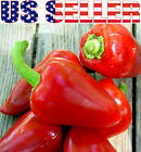 30+ ORGANICALLY GROWN Italian Sweet Pimento Pepper Seeds Heirloom NON-GMO USA