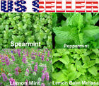 100+ ORGANICALLY GROWN Mint Mix 4Varieties Heirloom NON-GMO Spearmint Peppermint