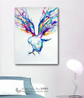 Colour Birds Hawk Stretched Canvas Print Framed Wall Art Home Decor Painting DIY