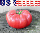 30 ORGANICALLY GROWN Brandywine Pink Tomato Seeds Heirloom NON GMO Beefsteak US