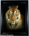 8x10* Black Framed Print Leopard, Lion, Tiger Limited Edition Pictures Painting