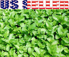100+ US ORGANICALLY GROWN Thai Mint Seeds Heirloom NON-GMO Fragrant Aroatic RARE