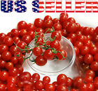 30+ ORGANICALLY GROWN Sweet Pea Currant Tomato Seeds Heirloom NON-GMO Rare Sweet