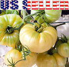 30+ ORGANICALLY GROWN GIANT Great White Beefsteak Tomato Seeds Heirloom NON GMO